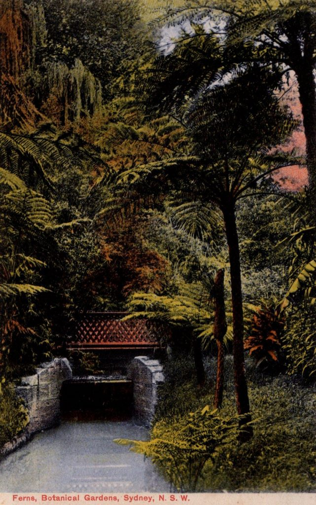 Ferns in Botanical Garden