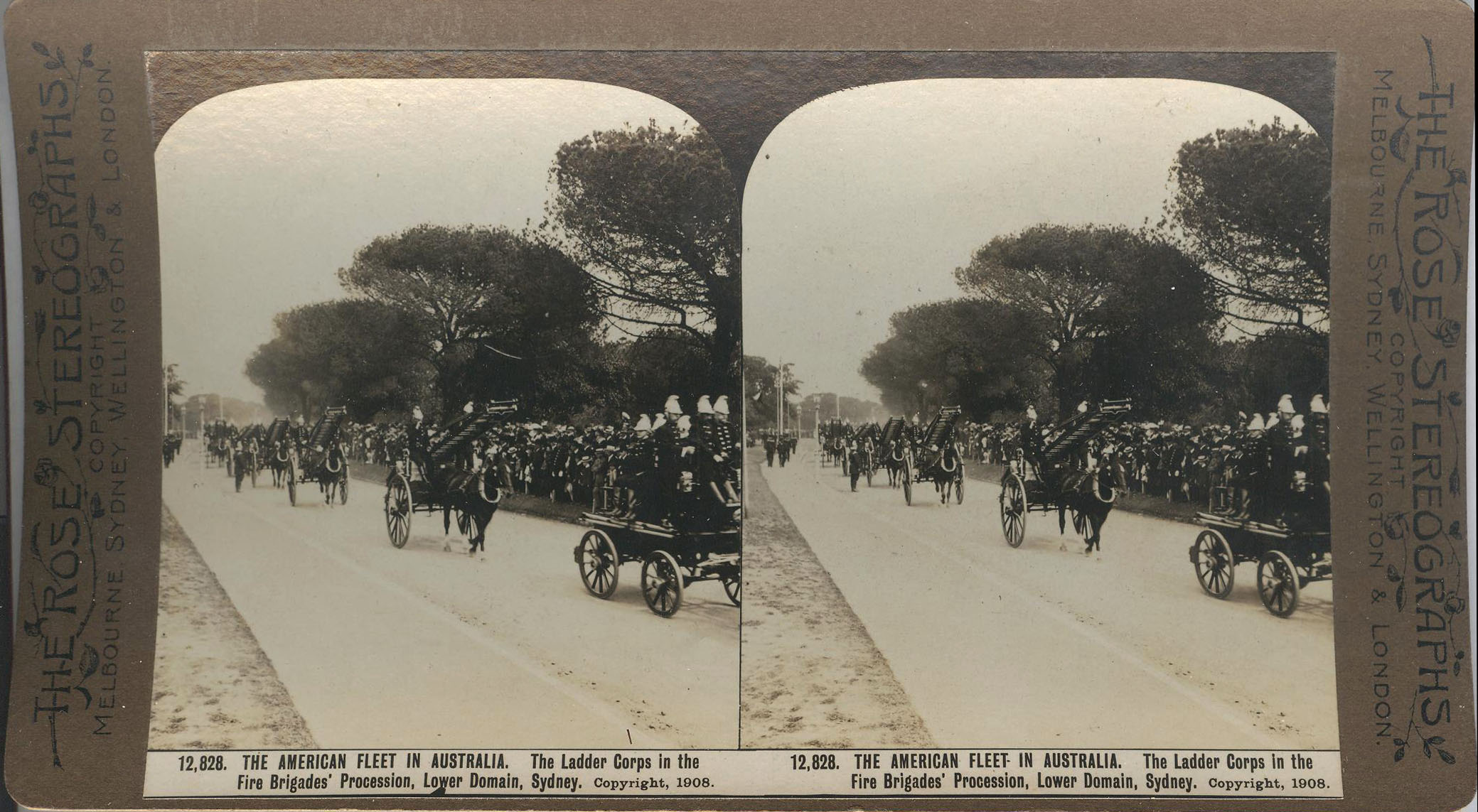 Rose Stereograph 12,828 001