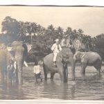 Konter_Ceylon_2 001