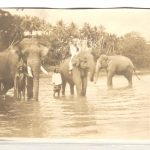 Konter_Ceylon_6 001